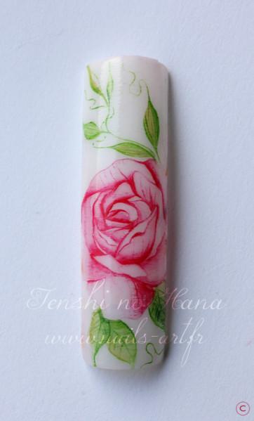 rose aquarelle 1er avril 2013